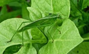 Field.Grasshopper