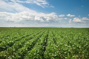 Field.Produce