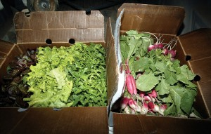Field.produce in box